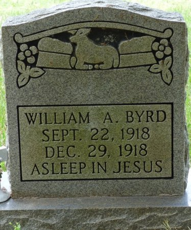 BYRD, WILLIAM A - Colbert County, Alabama | WILLIAM A BYRD - Alabama Gravestone Photos