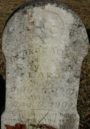 LARD, GEORGE ALLEN - Lauderdale County, Alabama   GEORGE ALLEN LARD - Alabama Gravestone Photos
